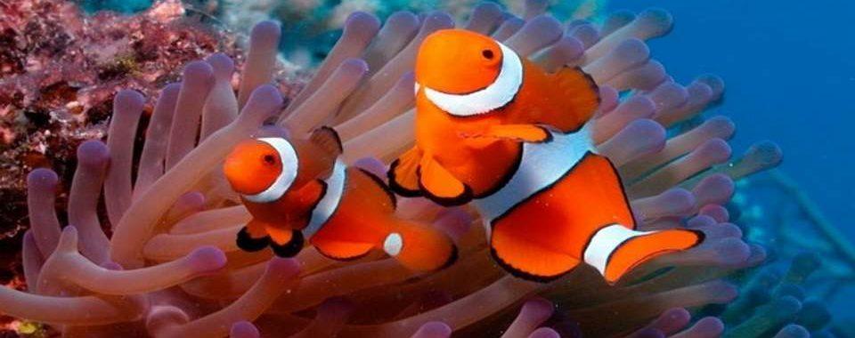 cursos-buceo-tarragona-submarinismo-p1
