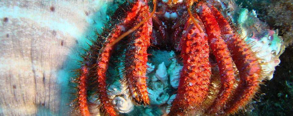 cursos-buceo-tarragona-submarinismo-p2