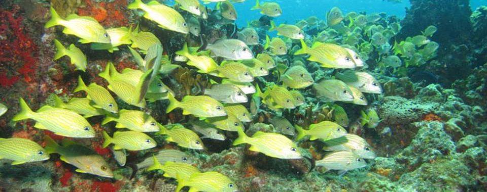 cursos-buceo-tarragona-submarinismo-p8