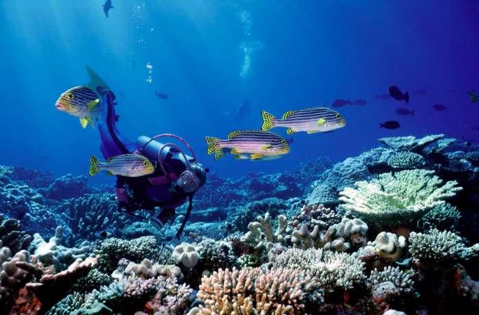 submarinismo-tarragona-cursos-buceo-p2