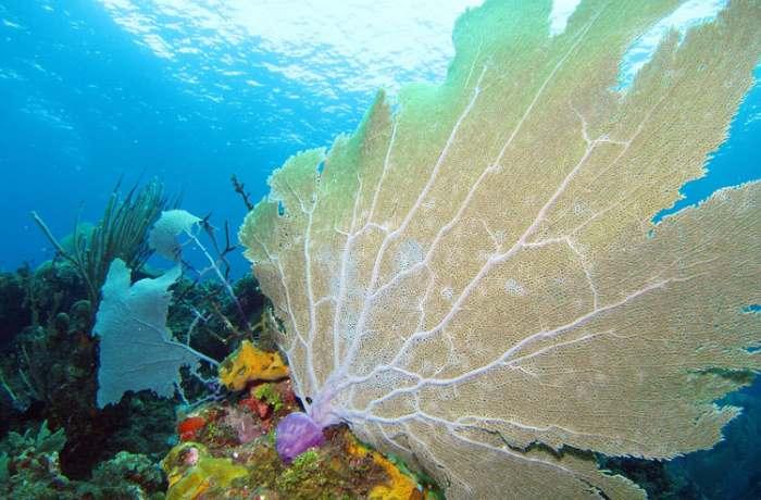 submarinismo-tarragona-cursos-buceo-p4