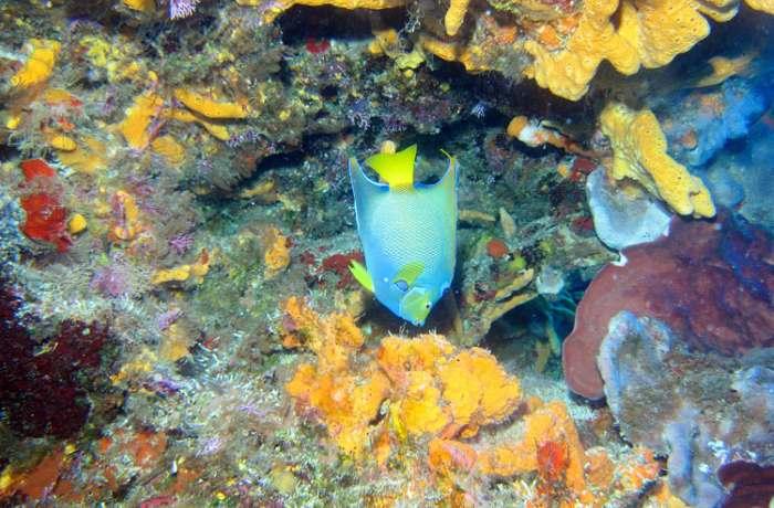 submarinismo-tarragona-cursos-buceo-p6